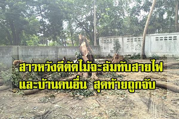 [ไทยแลนด์]สาวหวังดีตัดไม้จะล้มทับสายไฟและบ้านคนอื่น สุดท้ายถูกจับ