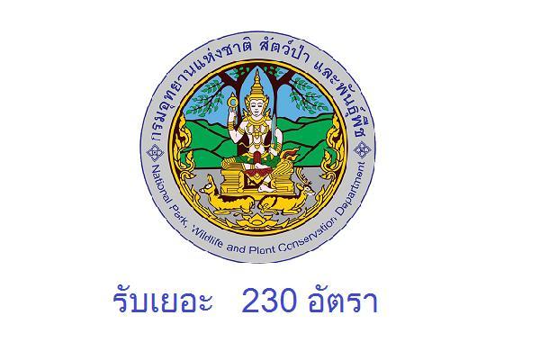 รับเยอะ 230 อัตรา ( ไม่ต้องผ่าน ภาค ก ) กรมอุทยานแห่งชาติ สัตว์ป่า และพันธุ์พืช รับสมัครพนักงานราชการ