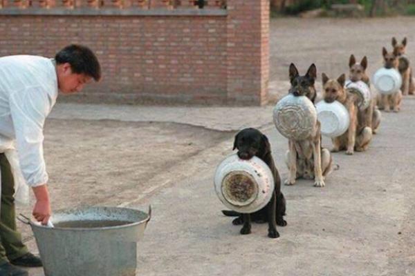 สุนัขจีนมาดูตอนรอกินข้าว บอกเลยว่าคนที่ชอบแซงคิวสะเทือนใจสุดๆ