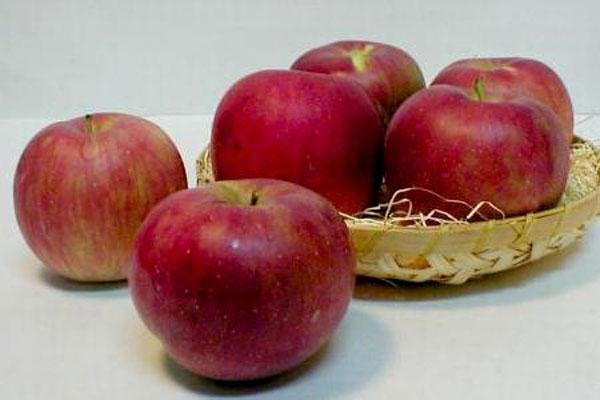 แอปเปิ้ล ผลไม้รูปงามนามเพราะกับนานาประโยชน์