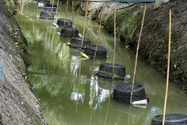 เกษตรผสมผสาน สวนผสม 1 ไร่ 200,000 บาท ทำได้จริงๆ ที่สมุทรสงคราม (ชมคลิป)